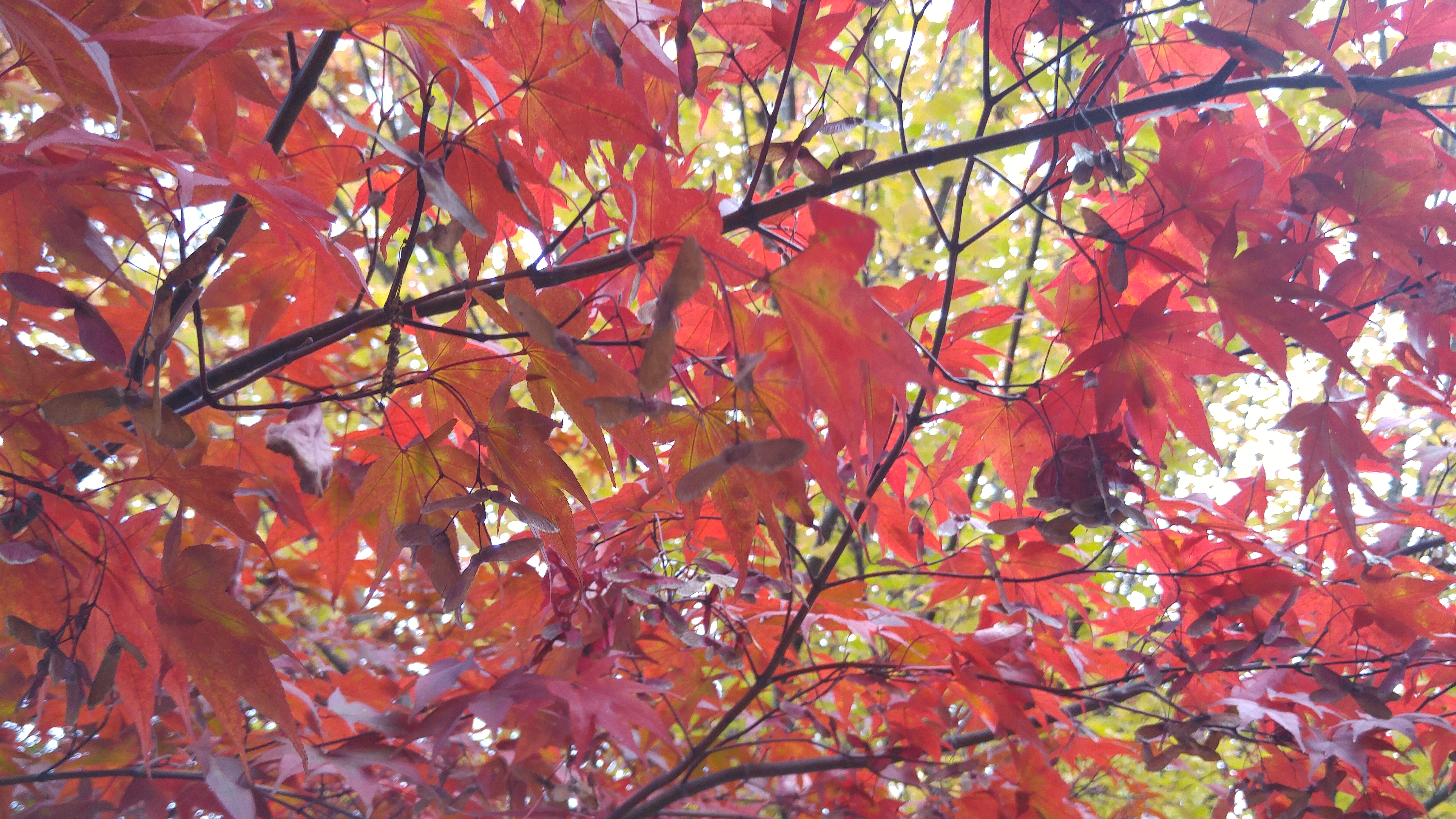 가을의 미소 단풍